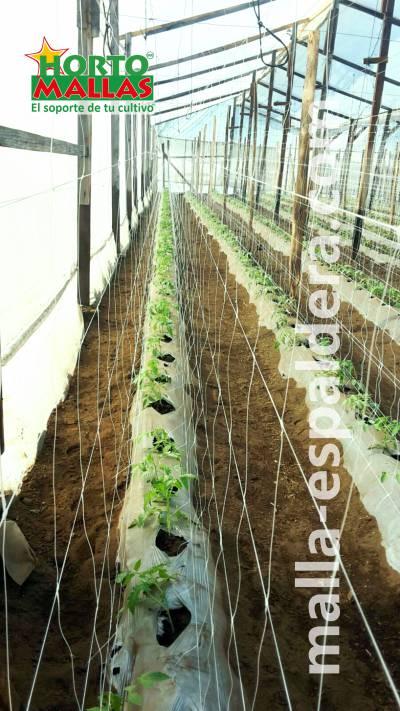 Como hacer un cultivo de tomates con malla espadera