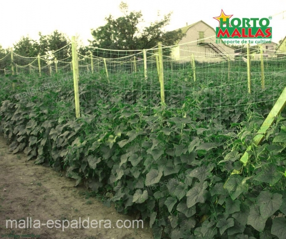 Cultivo de pepino con malla espaldera HORTOMALLAS.