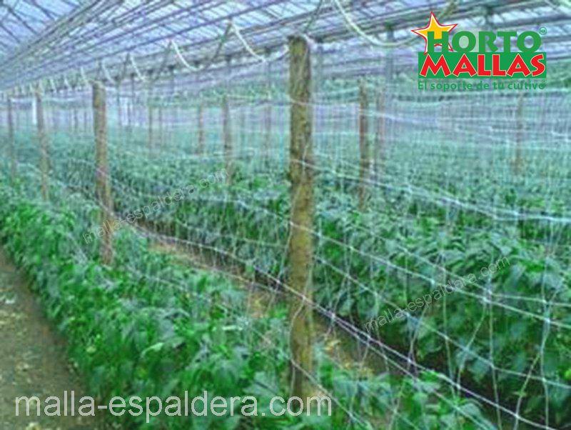 entutoramiento de hortalizas