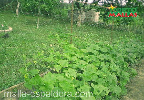 Malla espaldera en cultivo de pepinos